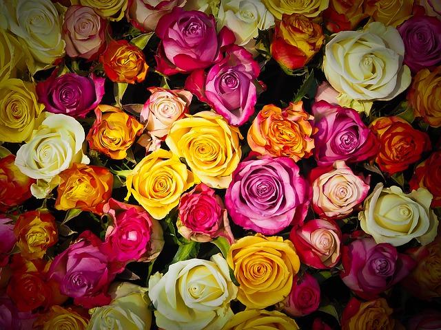spoustu růží