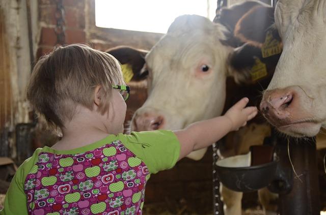 dívka u krav
